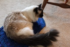 Lucy060312 240x160 Lots of Knitters